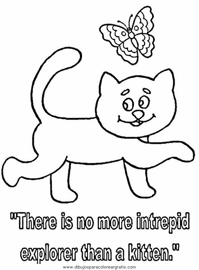 animales/gatos/gatos_072.JPG
