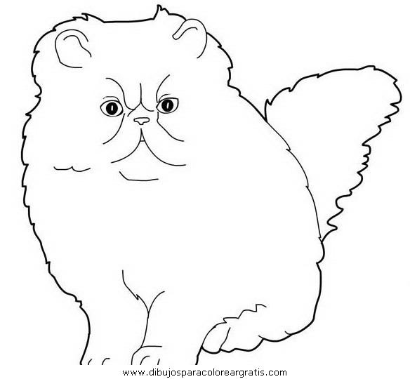animales/gatos/gatos_112.JPG