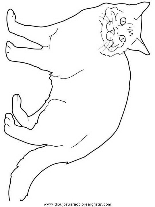 animales/gatos/gatos_113.JPG