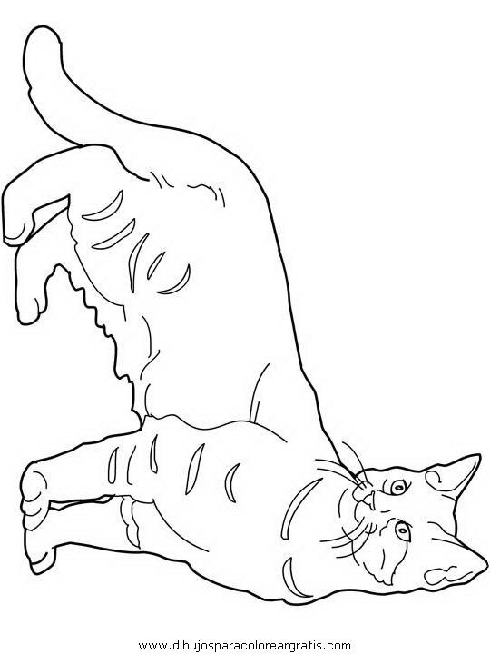 animales/gatos/gatos_117.JPG