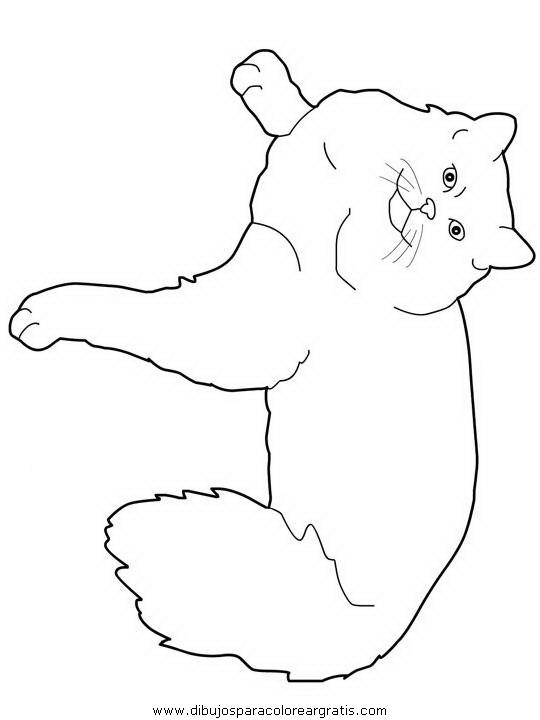 animales/gatos/gatos_118.JPG
