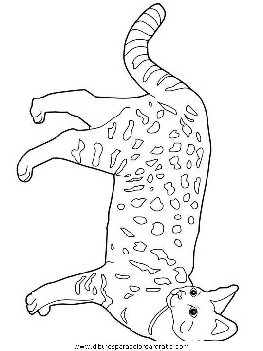 animales/gatos/gatos_120.JPG