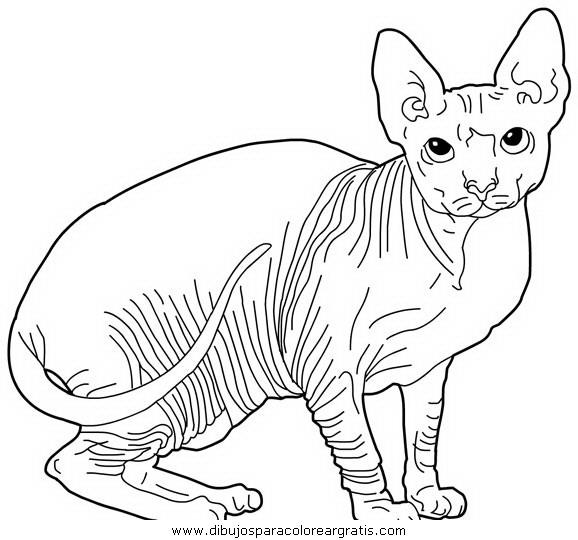 animales/gatos/gatos_121.JPG