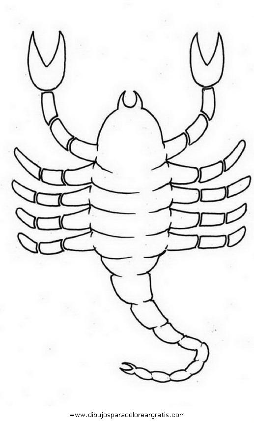 animales/insectos/alacran_5.JPG