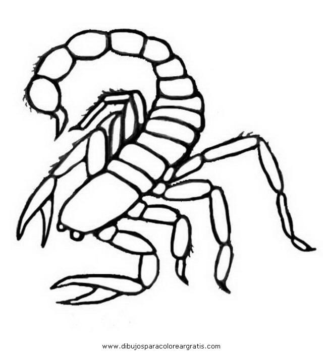 animales/insectos/alacran_7.JPG