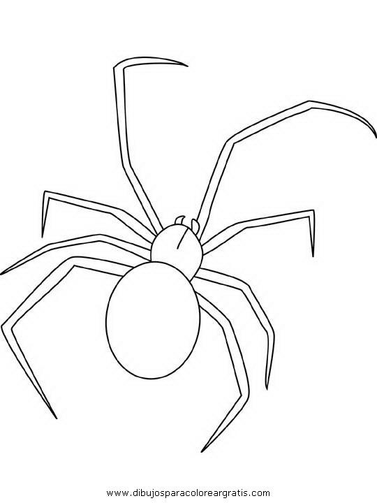 animales/insectos/aranas_00.JPG