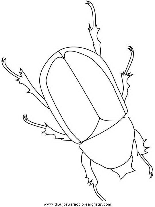 animales/insectos/beetle.JPG