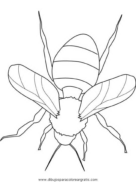 animales/insectos/bumblebee.JPG