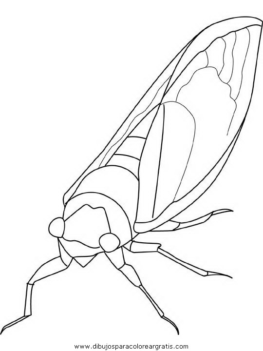 animales/insectos/cicada.JPG