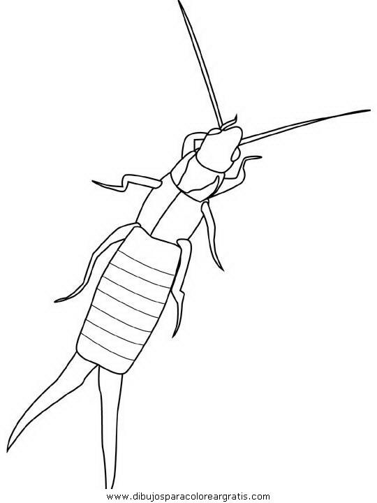 animales/insectos/earwig.JPG