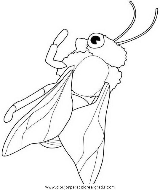 animales/insectos/honeybee.JPG