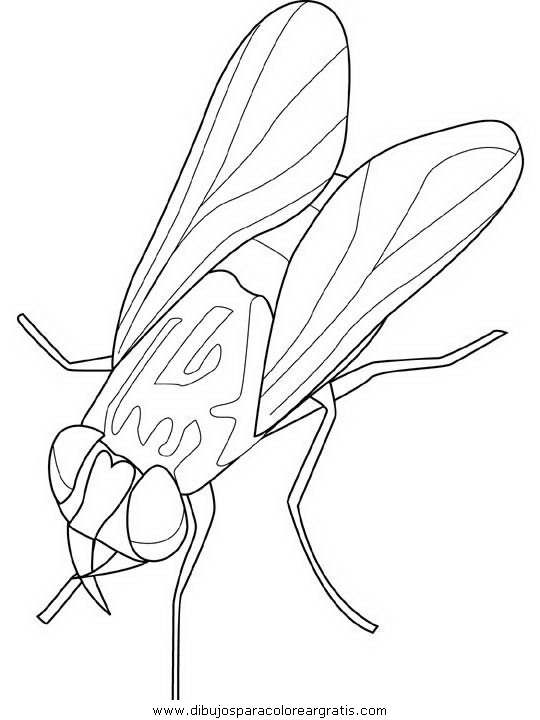 animales/insectos/housefly.JPG