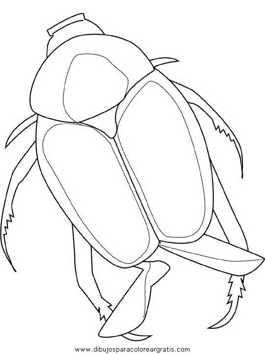 animales/insectos/japanese-beetle.JPG