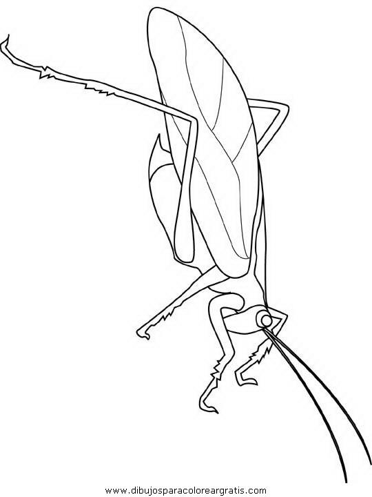 animales/insectos/katydid.JPG