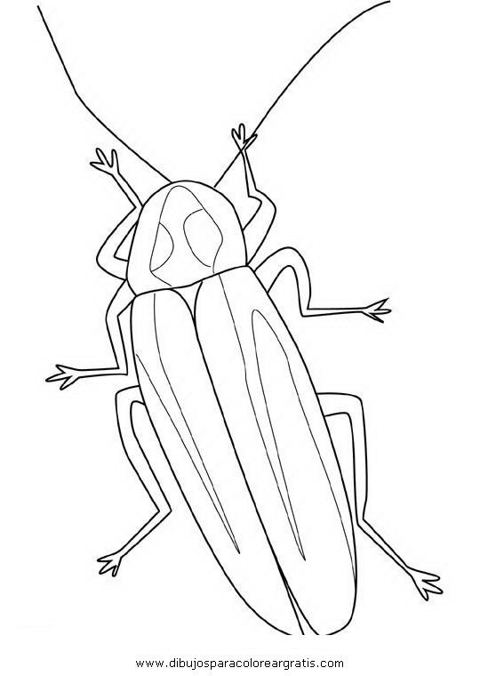animales/insectos/luciernagas_3.JPG