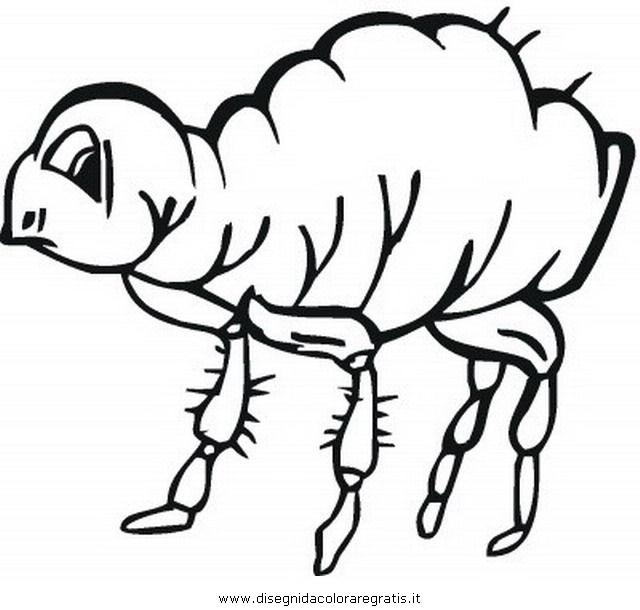 animales/insectos/piojo_1.JPG