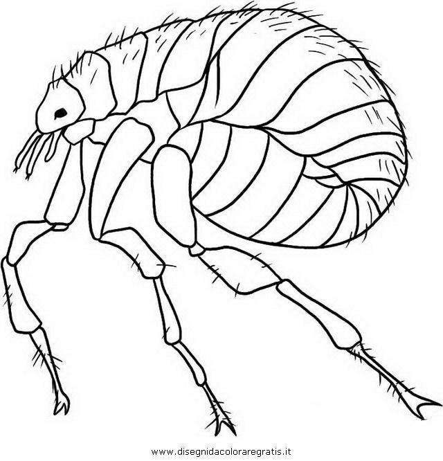 animales/insectos/piojo_4.JPG