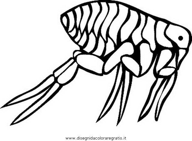 animales/insectos/piojo_5.JPG