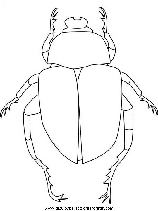 animales/insectos/scarab-beetle.JPG
