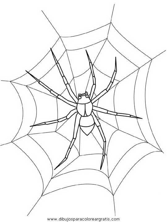 animales/insectos/spider.JPG