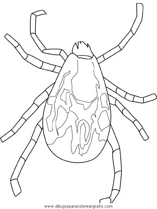 animales/insectos/tick.JPG