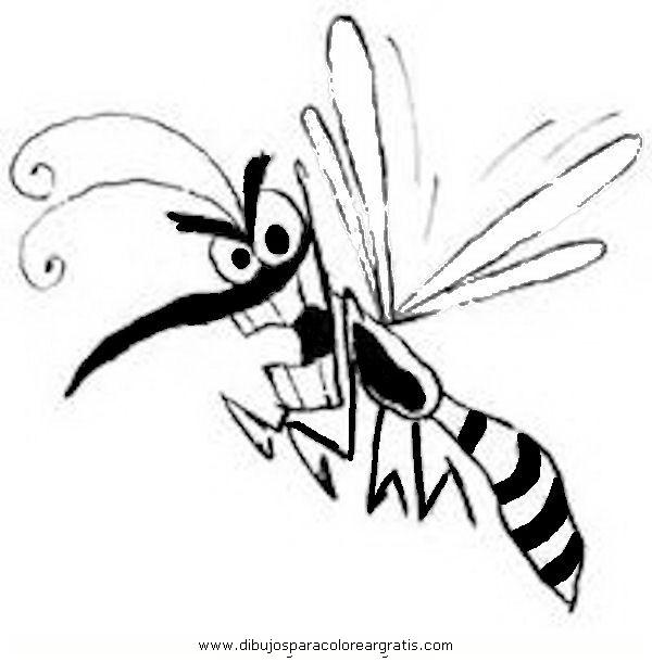 animales/insectos/zancudo_2.JPG