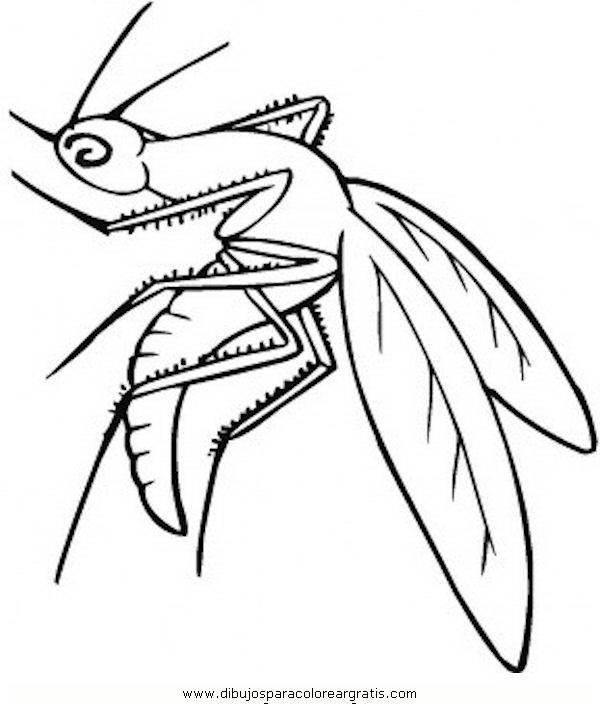 animales/insectos/zancudo_3.JPG