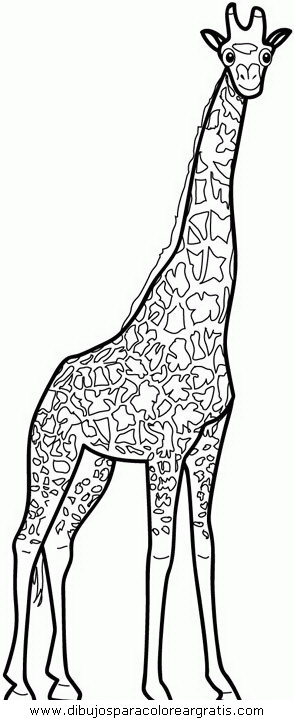 animales/jirafas/jirafas_04.JPG