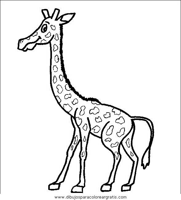 animales/jirafas/jirafas_08.JPG