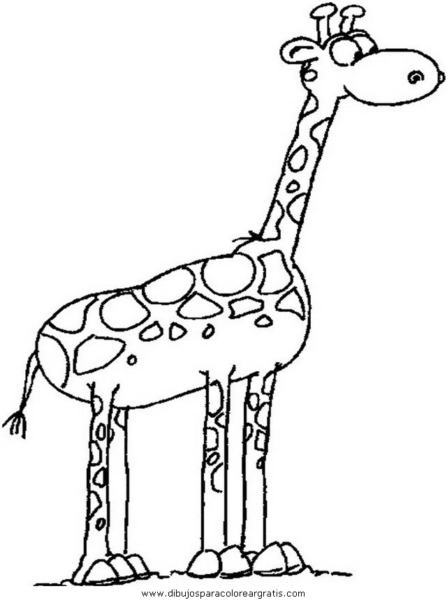 animales/jirafas/jirafas_10.JPG