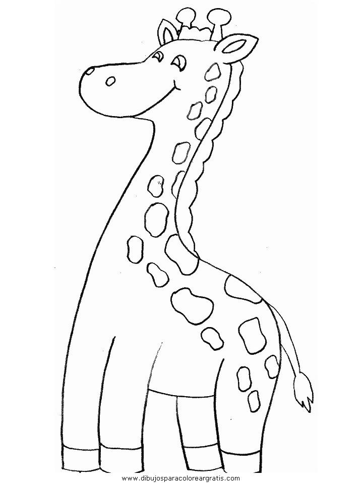 animales/jirafas/jirafas_17.JPG