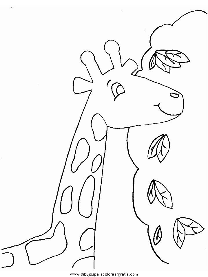 animales/jirafas/jirafas_20.JPG