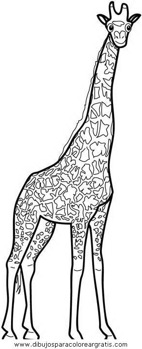 animales/jirafas/jirafas_22.JPG