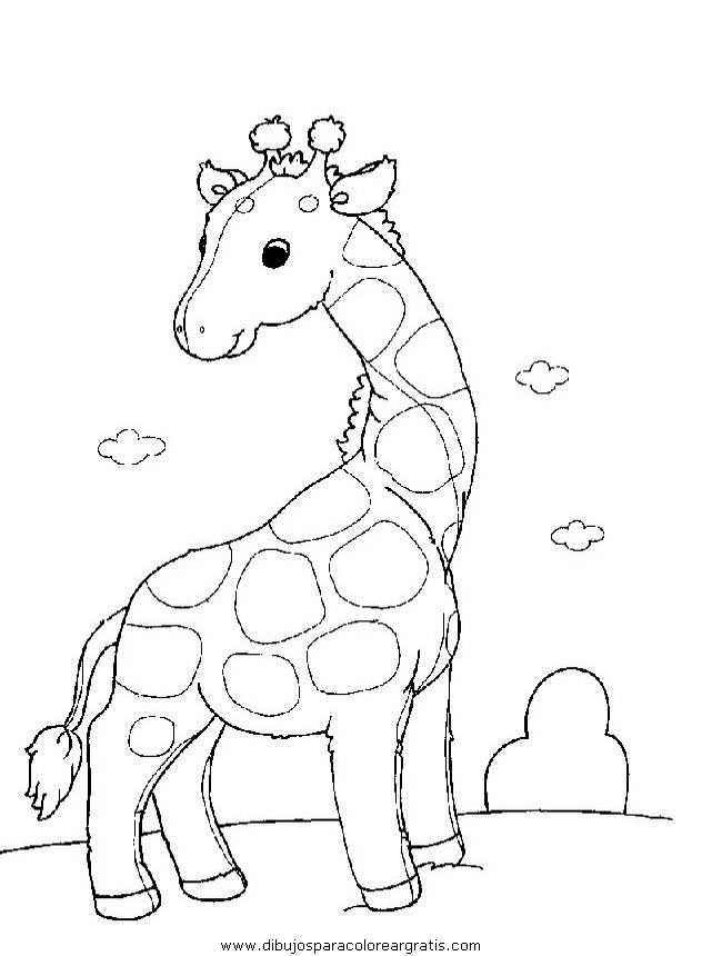 animales/jirafas/jirafas_27.JPG
