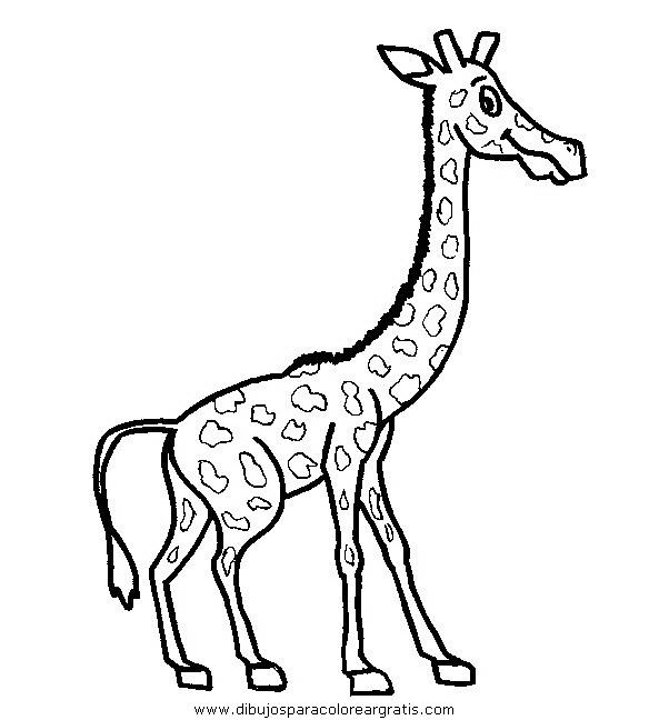 animales/jirafas/jirafas_30.JPG