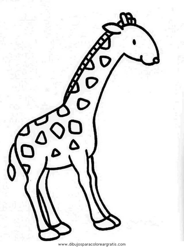 animales/jirafas/jirafas_32.JPG