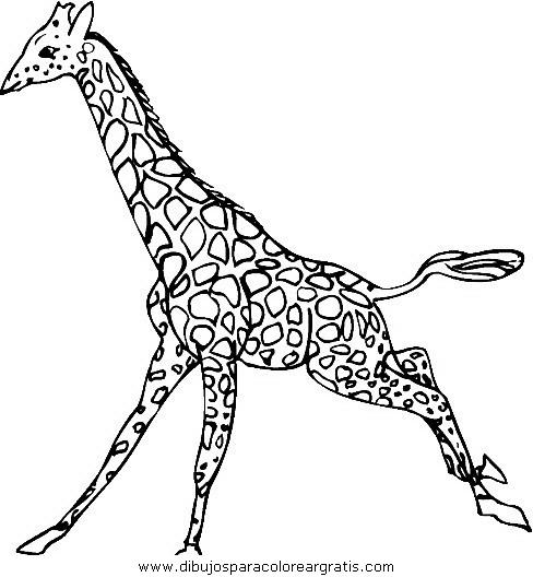 jiraf animal running