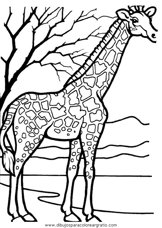 animales/jirafas/jirafas_37.JPG