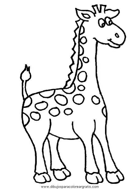 animales/jirafas/jirafas_41.JPG