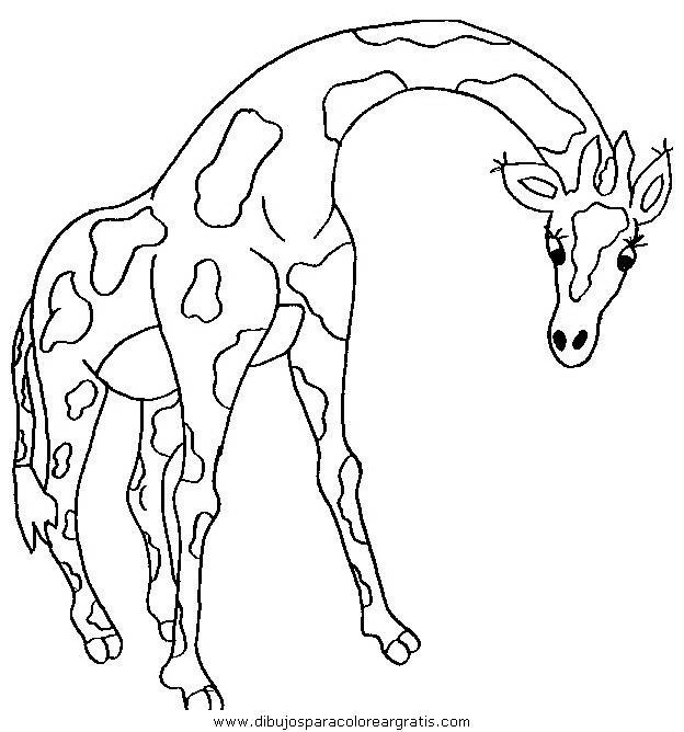 animales/jirafas/jirafas_44.JPG