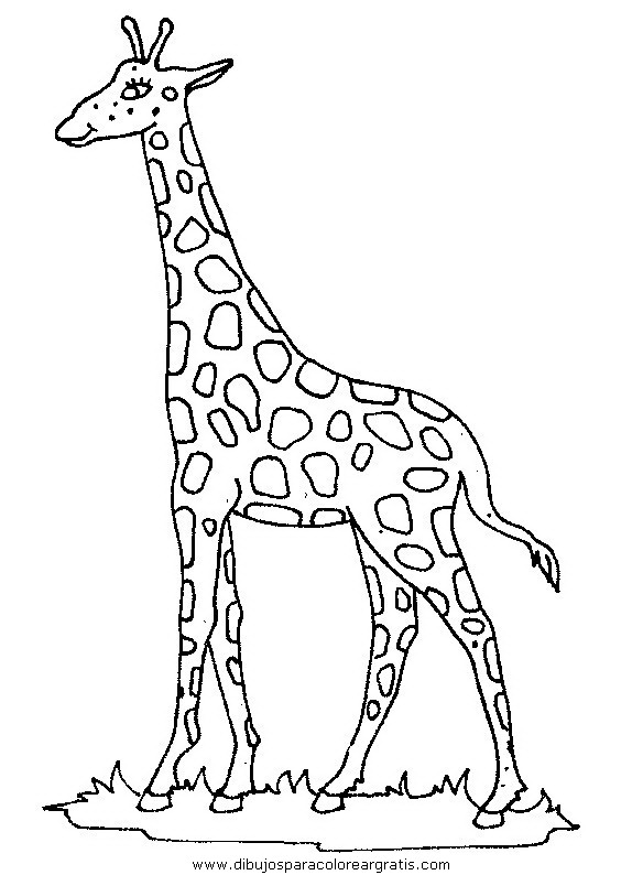 animales jirafas_45