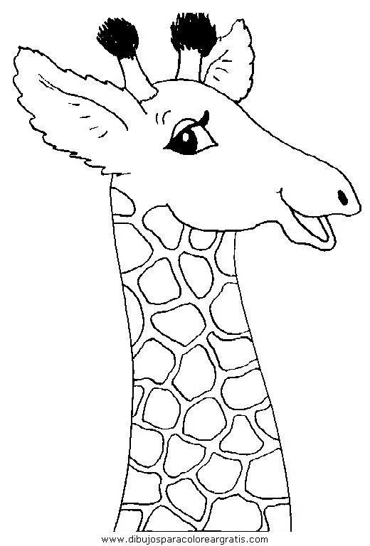 animales/jirafas/jirafas_47.JPG