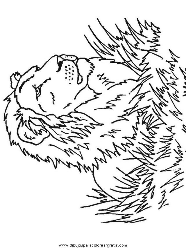 animales/leones/leones_10.JPG