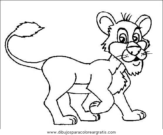 animales/leones/leones_34.JPG