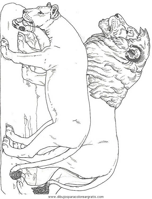 animales/leones/leones_42.JPG
