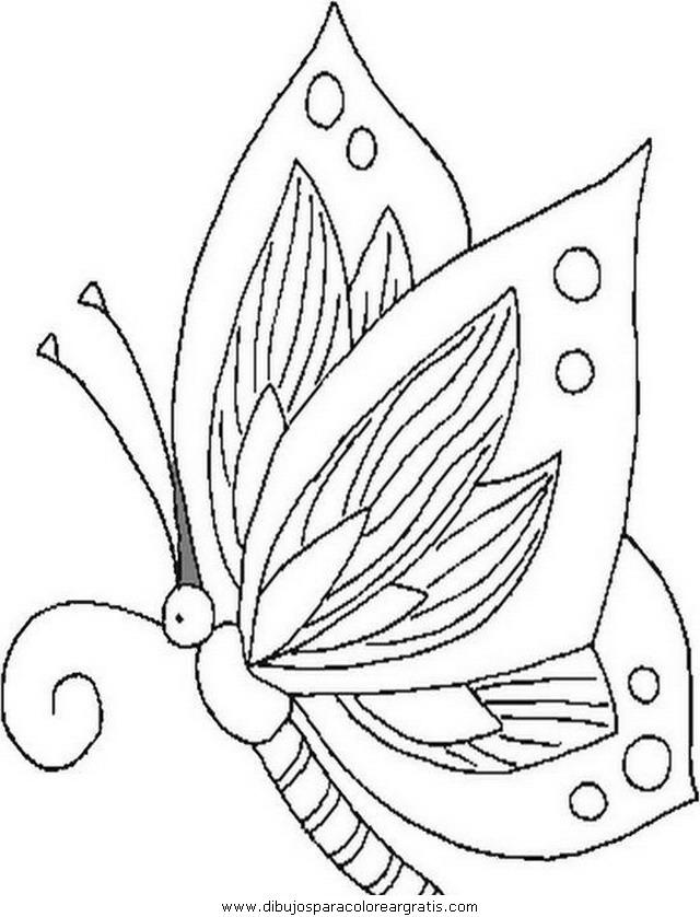 animales/mariposas/mariposas_001.JPG