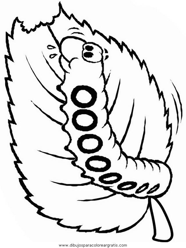 animales/mariposas/mariposas_005.JPG
