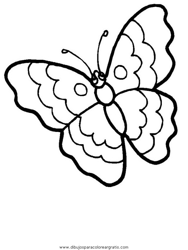 animales/mariposas/mariposas_007.JPG