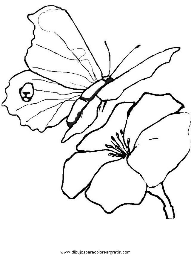 animales/mariposas/mariposas_008.JPG