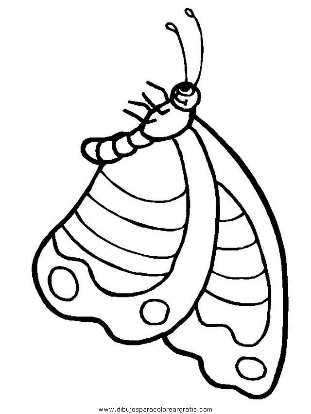 animales/mariposas/mariposas_010.JPG